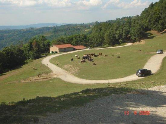 Parco Safari