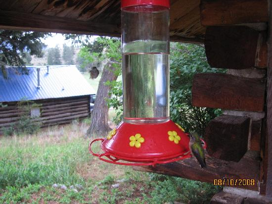 Sagewood Cabins: humming birds