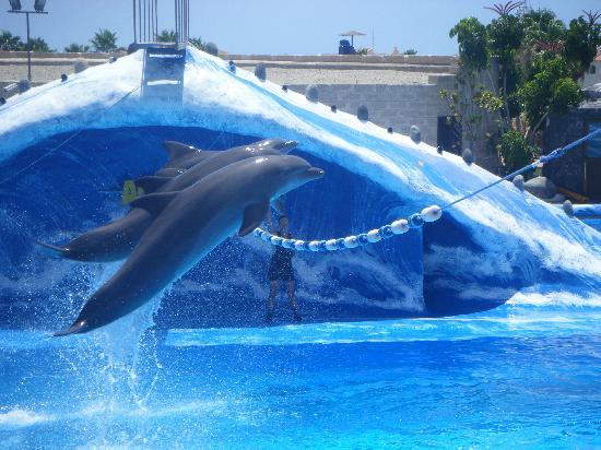 Aqualand Costa Adeje : dolphin show