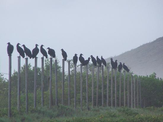 Laguna Mar: Early morning birds at the lagoon