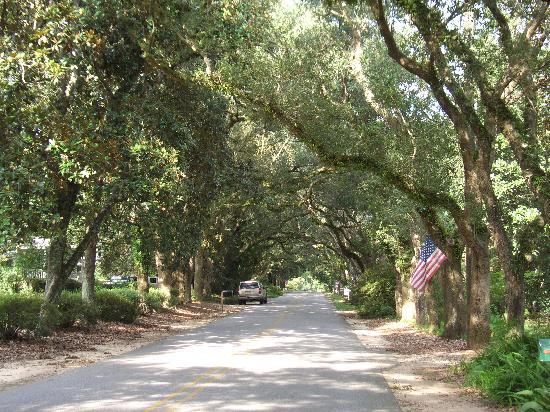 Magnolia Springs Bed & Breakfast: Road in front of Magnolia Springs