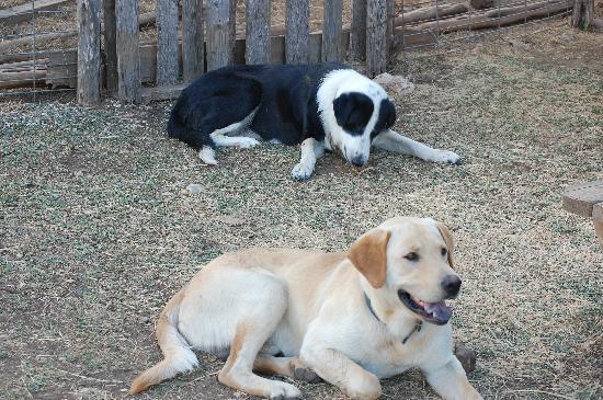 The Farmyard: Farmyard dogs