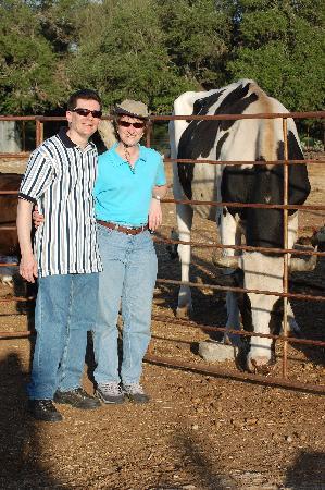 The Farmyard: Cowboy the Ox