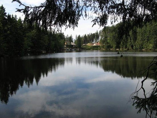 Baden-Wurttemberg, Jerman: Small lake in the blackforest