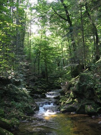 Baden-Wurttemberg, Jerman: Blackforest