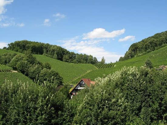 Baden-Wurttemberg, Jerman: Blackforest view from a small hill