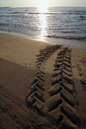 Playa de Mil Palmeras 1