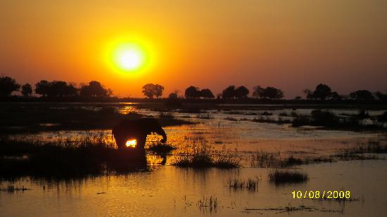 Linyanti Reserve, Botswana: Elephant on the Linyanti at sunset