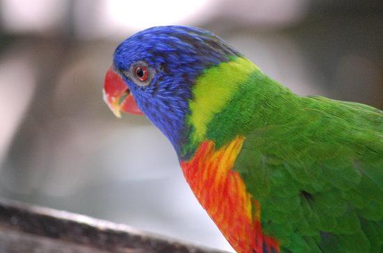 พอร์ตดักลาส, ออสเตรเลีย: Pretty Bird
