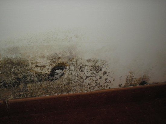 Edelweiss Hotel: mould in room
