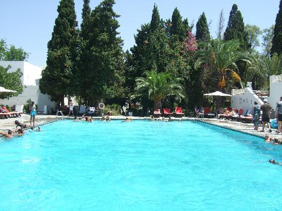 The Orangers Beach Resort & Bungalows : The pool
