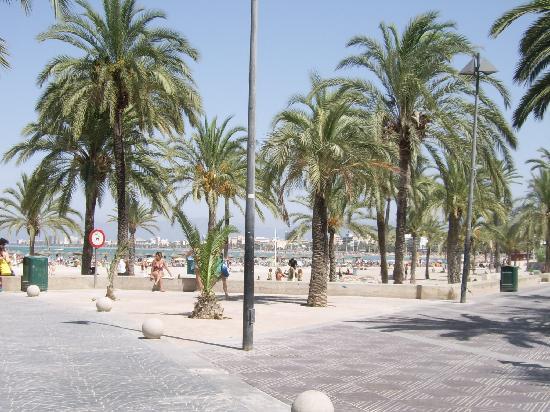 Santa Monica: La spiaggia e il lungomare vicini all'hotel