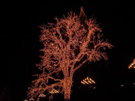 Lisebergs Nojespark: Beautifully lit trees.......