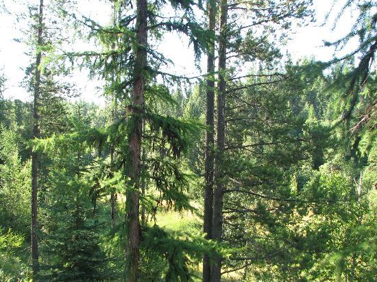 写真Mountain Cleft Wilderness Retreat枚