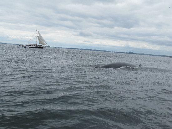 Island Cruises Whalewatching