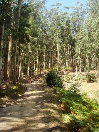 Playa de Rodas: Trails