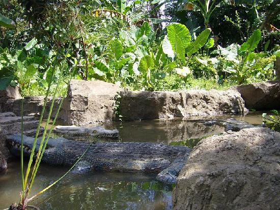 Bali Safari & Marine Park: Fake Crocs on Jungle cruise