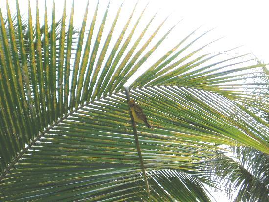 Sands Suites Resort & Spa: bird from balcony