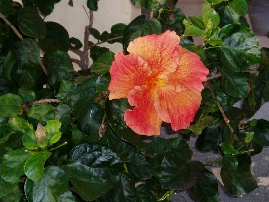 Sands Suites Resort & Spa: Hibiscus at the Sands