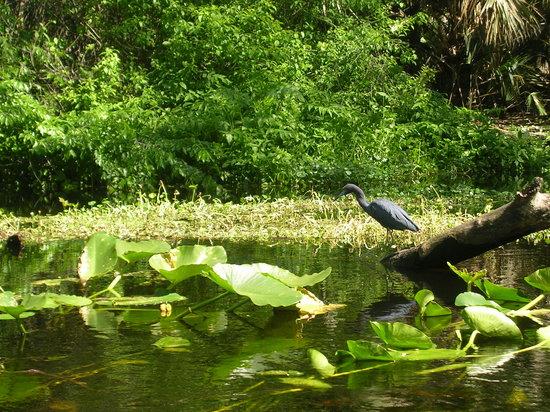 Wekiwa Springs State Park: Pretty bird