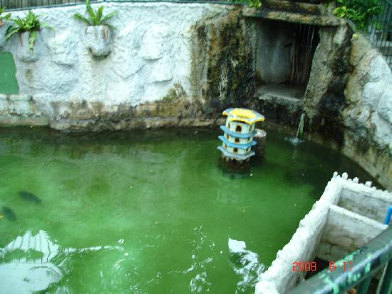 Manila Zoo : pond