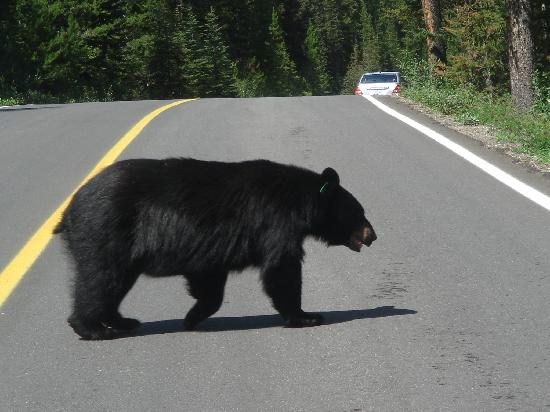 Lago Louise, Canadá: Always look both ways before crossing the road