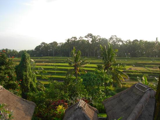 Maya Ubud Resort & Spa: View of the rice paddies from our room