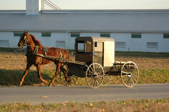 Lancaster, Pennsylvania:: Amish buggy