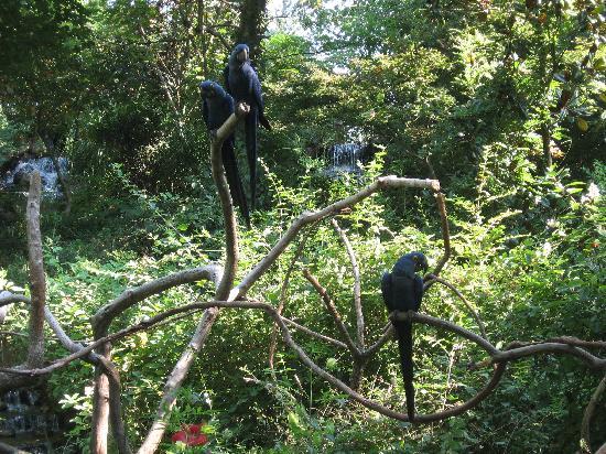 Nashville Zoo: Parrots