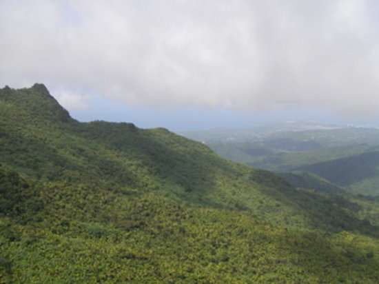 Bosque Nacional El Yunque, Puerto Rico: View from the top