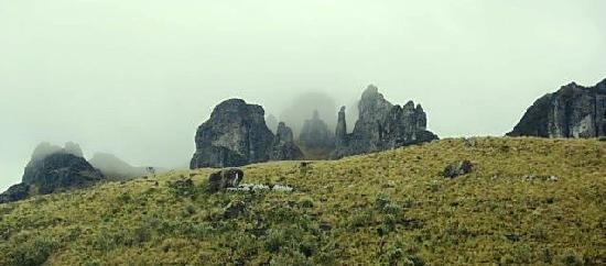 El Cajas National Park: détail Cajas
