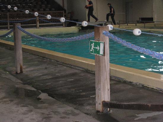 All Weather Zoo (Allwetterzoo Muenster): kleines Delfinbecken ohne sichere Absperrung