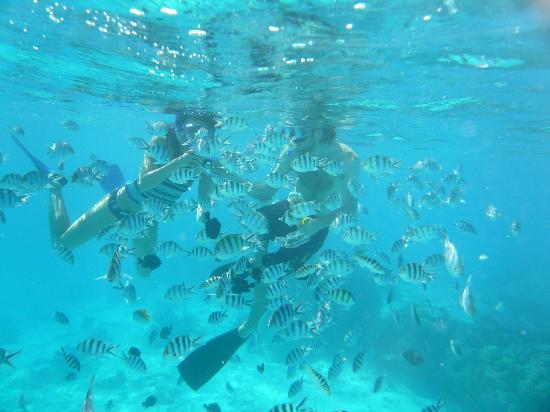 Isole della Società, Polinesia francese: Snorkeling near Toopuaiti