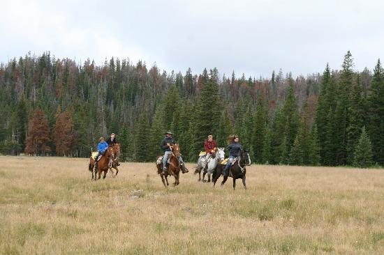 Triangle C Dude Ranch: Fun Ride through a local Meadow