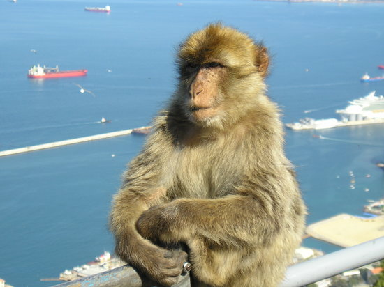 Gibraltar : Happy monkey!