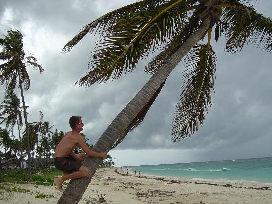 Luxury Bahia Principe Ambar: Getting coconuts!