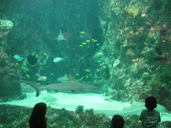 Oceanopolis: The big tank