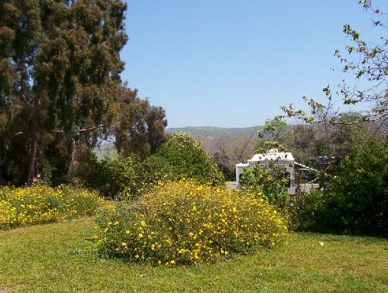 Another San Mateo Campground Spring Picture, March 2008