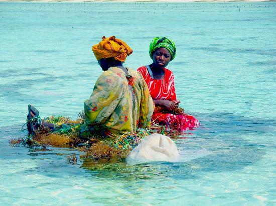 Zanzibar, Tanzania: seaweed gathering