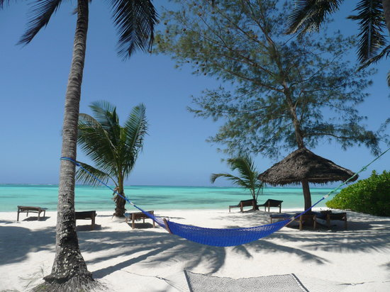Pongwe Beach Hotel: hammocks between coconuttrees