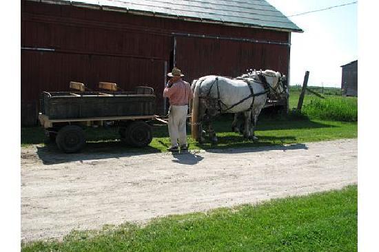 Edencrest Farm B&B: Horse & Buggy
