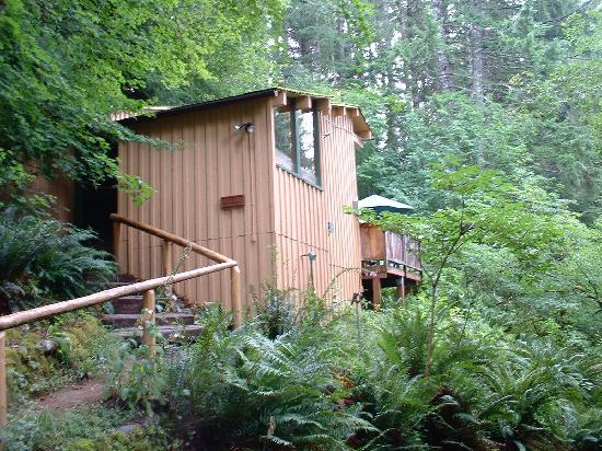 Delicieux Deep Forest Cabins At Mt. Rainier: Cabin In The Woods