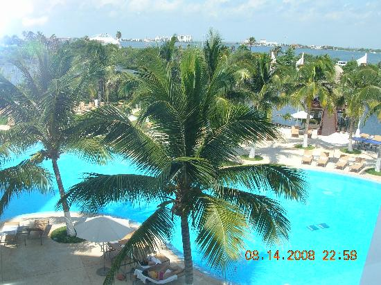 Palm trees poolside