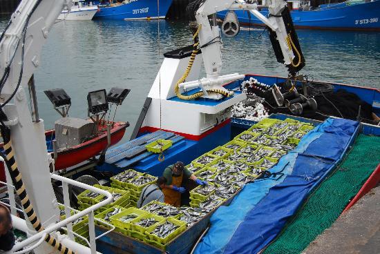 Santona, Spain: La pesca recién llegada