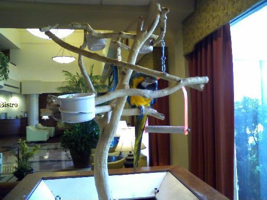 DoubleTree Suites by Hilton Hotel Cincinnati - Blue Ash: The Parrot at the Front Desk