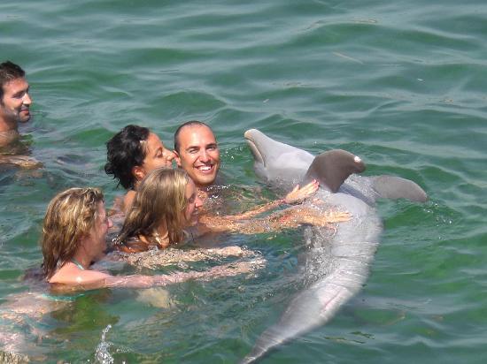 Bagno con i delfini picture of barcelo solymar varadero