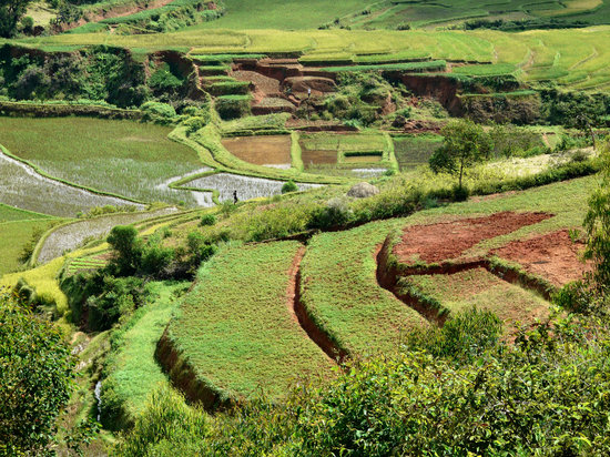 Madagascar: Reisterrasse