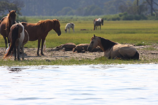 Assateague Explorer Wildlife Cruises