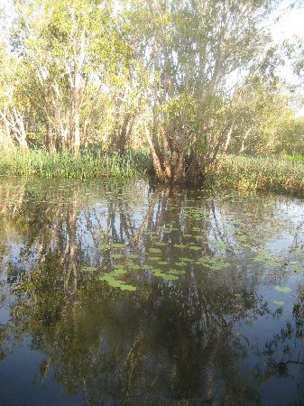 Kakadu National Park, Australia: Paperbark trees in Yellow Waters flood plain