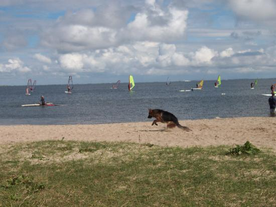 Windsurf Ringkobing Fjord Picture Of Denmark Europe Tripadvisor